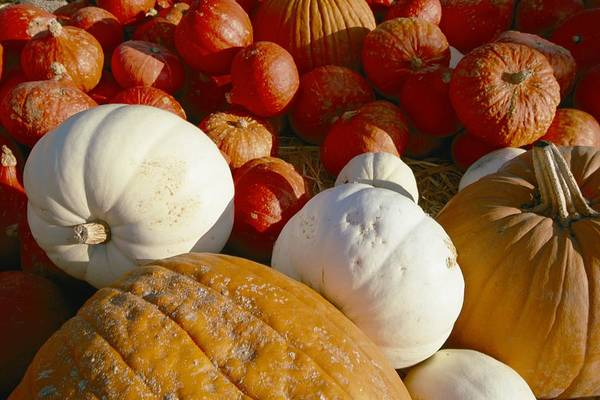 Solvang Photograph - A Pile Of Pumkins Of Different Colors by Marc Moritsch