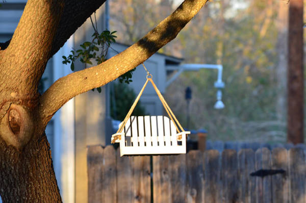 Perching Photograph - A Place To Perch by Nikki Marie Smith