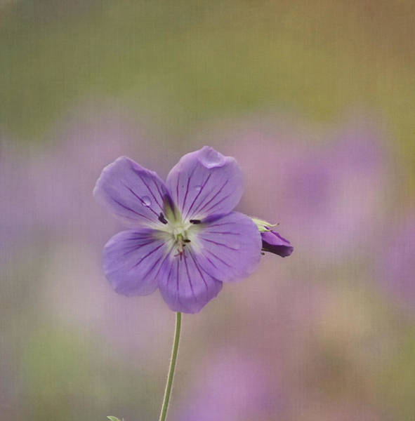 Photograph - A Purple Moment by Kim Hojnacki