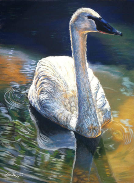 Trumpeter Swan Painting - A Quiet Moment by Deb LaFogg-Docherty