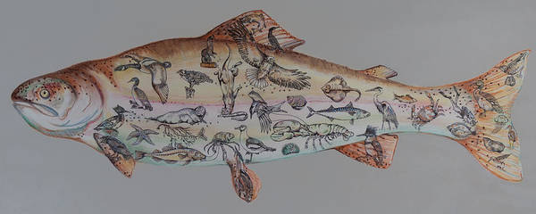 Great Blue Heron Drawing - A Rainbow Trout by Burland Murphy