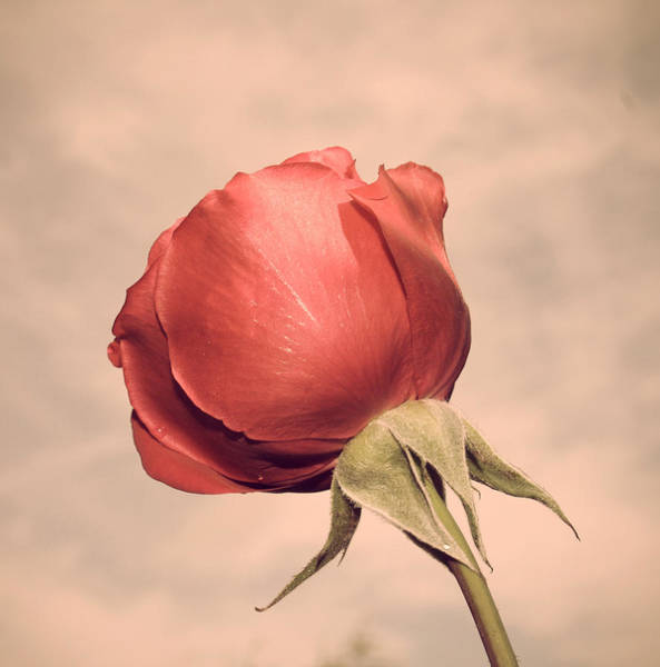 Photograph - A Rose Is Still A Rose by Georgia Fowler