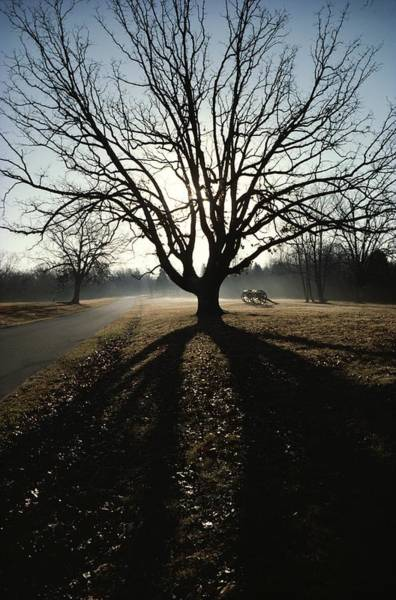 Between The Trees Photograph - A Silhouetted Oak Tree Dwarfs A Cannon by Sam Abell