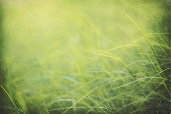 Chartreuse Photograph - A Soft Place To Fall by Amy Tyler