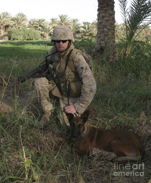 Photograph - A Soldier And His Search Dog Taking by Stocktrek Images
