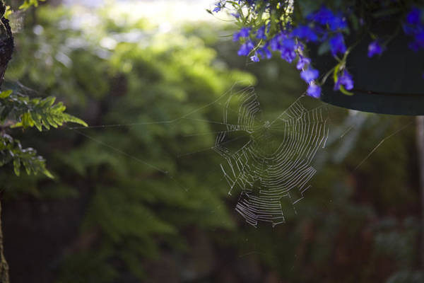 Queen Charlotte Islands Wall Art - Photograph - A Spider Web In A Garden by Taylor S. Kennedy