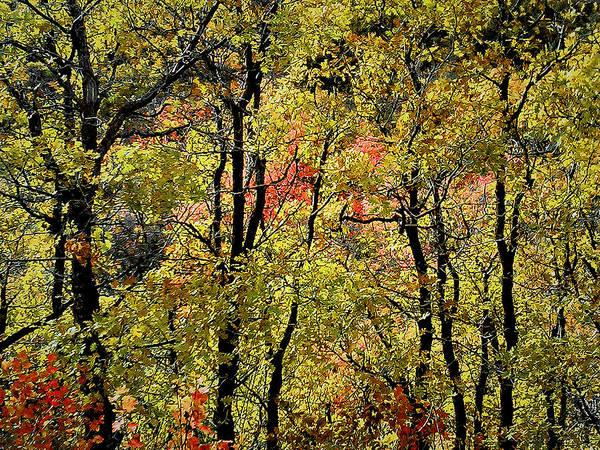 Photograph - A Splash Of Fall by Susan Kinney