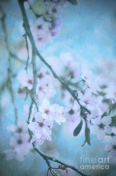 Photograph - A Subtle Spring by Tara Turner