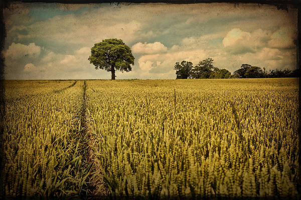 Warwickshire Photograph - A Summers Walk by Sharon Johnstone