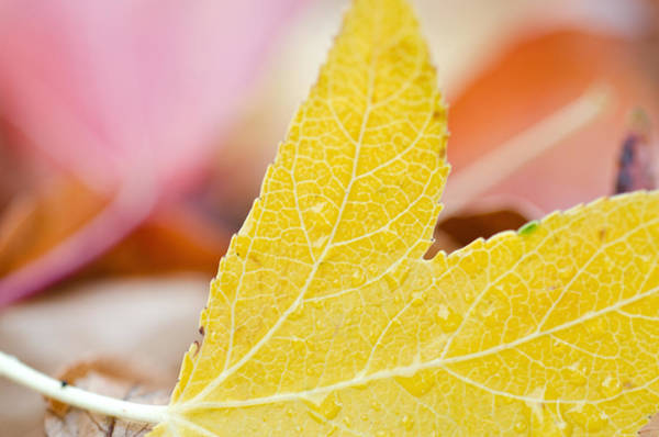Photograph - A Taste Of Autumn by Margaret Pitcher