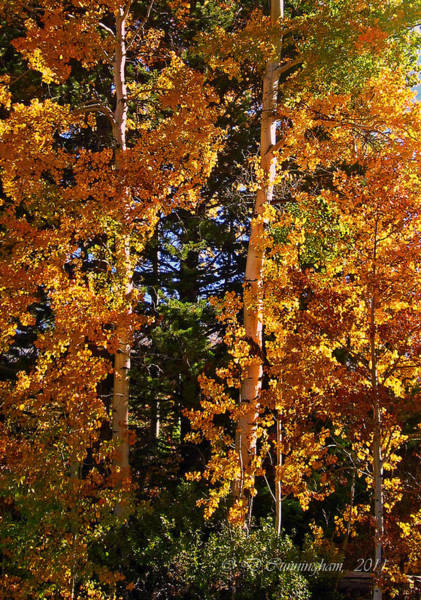 Photograph - A Taste Of Fall by Dorothy Cunningham