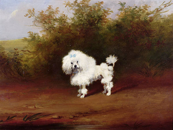 Kitsch Painting - A Toy Poodle In A Landscape  by Frederick French