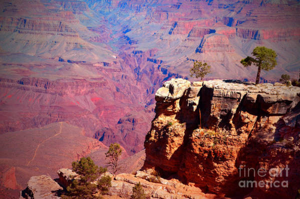 Photograph - A Tree And The Canyon by Tara Turner