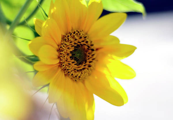 Photograph - A Wish For Sunshine In Your Day by Joanne Brown