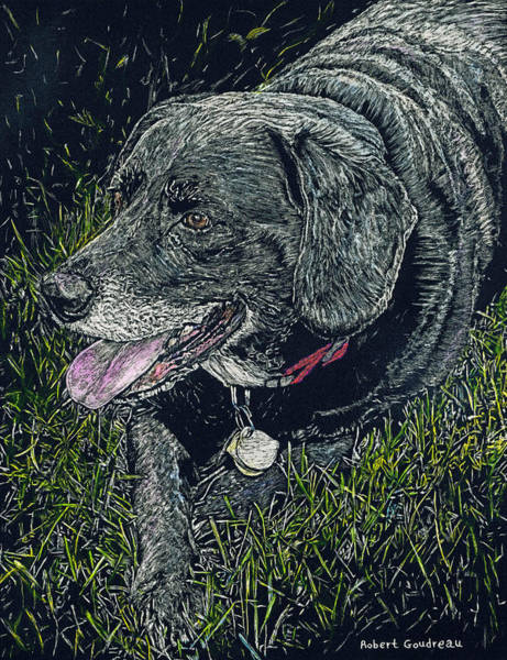 Black Lab Mixed Media - Abbe The Dog by Robert Goudreau