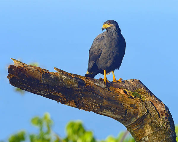 Photograph - Above The Mangrove by Tony Beck