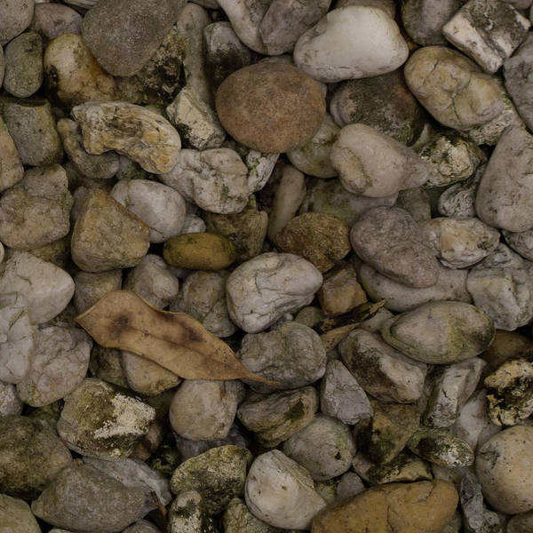Photograph - Abstract In Leaf And Stones by David Coblitz