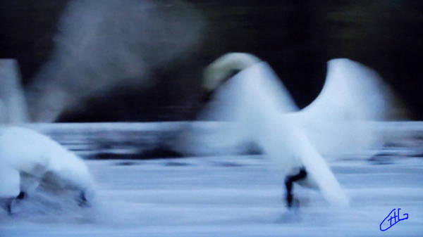 Photograph - Abstract Swan Dance by Colette V Hera  Guggenheim
