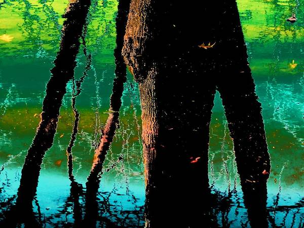 Photograph - Abstract Tree Reflection by Beth Akerman