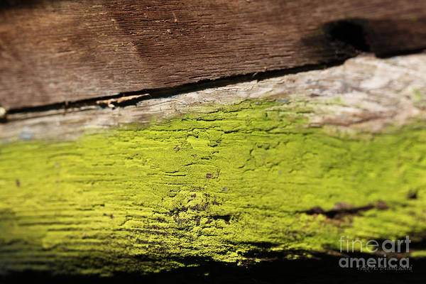 Photograph - Abstract With Green by Todd Blanchard