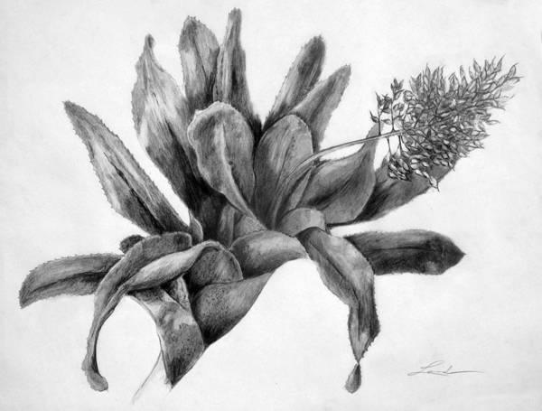 Oahu Drawing - Achmea by Lourdan Kimbrell