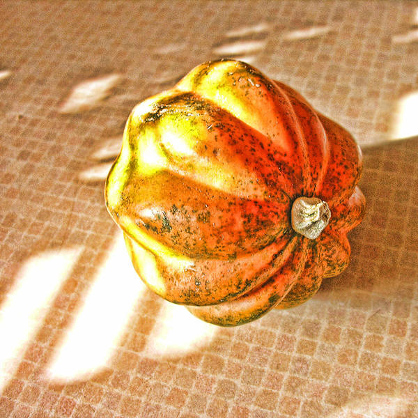 Acorn Squash Photograph - Acorn Squash by Bonnie Bruno