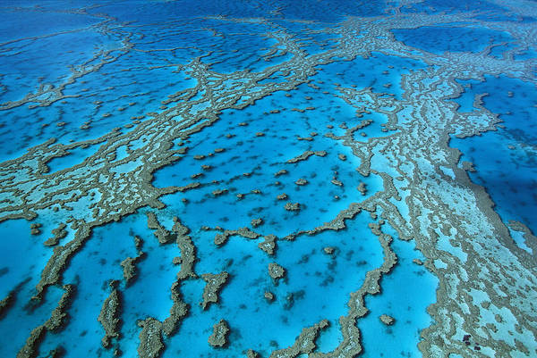 Photograph - Aerial View Of Coral Formations by Jean-Paul Ferrero