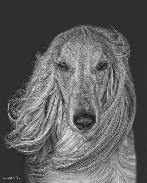 Digital Art - Afghan Hound   by Larry Linton