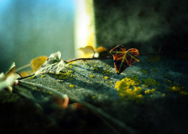 Photograph - After Life by Rebecca Sherman