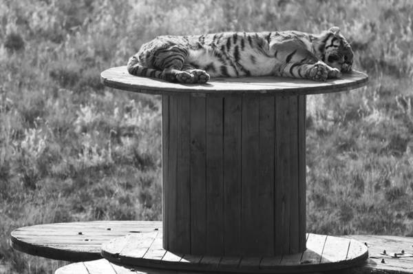 Photograph - Afternoon Nap Time by Colleen Coccia