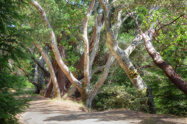 Photograph - afternoon walk in Marin by Peter Dyke