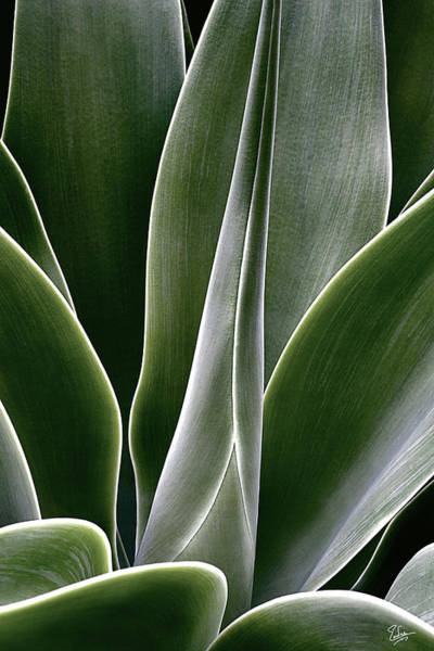 Photograph - Agave by Endre Balogh