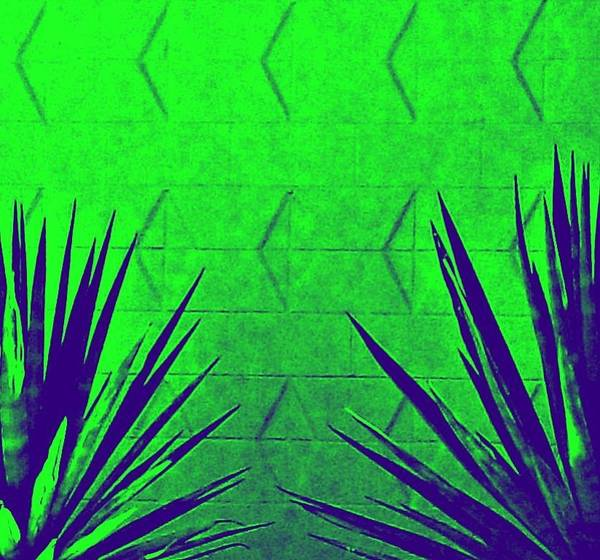 Wall Art - Photograph - Agave On Green by Randall Weidner