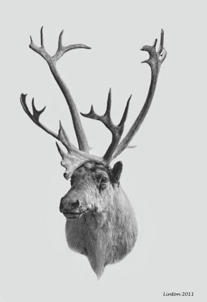 Digital Art - Alaska Elk by Larry Linton