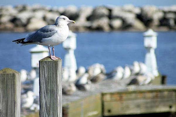 Photograph - Alcona Marina Seagulls 10 by Scott Hovind