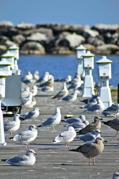 Photograph - Alcona Marina Seagulls 3 by Scott Hovind