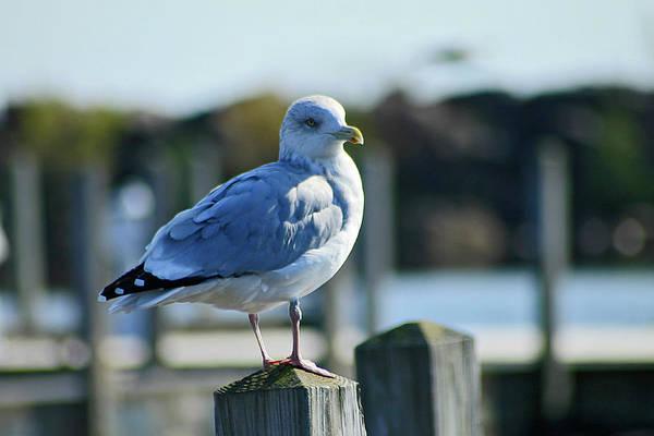 Photograph - Alcona Marina Seagulls 5 by Scott Hovind