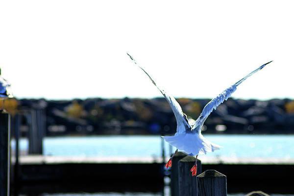 Photograph - Alcona Marina Seagulls 7 by Scott Hovind