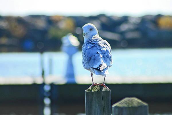 Photograph - Alcona Marina Seagulls 8 by Scott Hovind