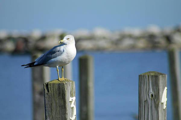 Photograph - Alcona Marina Seagulls by Scott Hovind