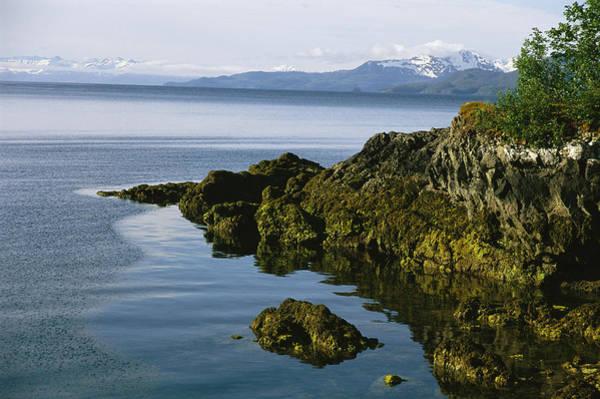 Gulf Of Alaska Photograph - Algae-covered Rocks, Snow-covered by Kate Thompson