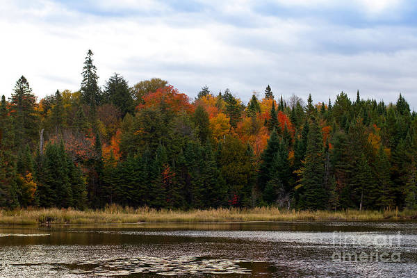 Photograph - Algonquin Park In Fall by Les Palenik