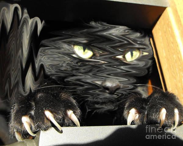 Liquify Photograph - Alice's Cat by Rebecca Margraf