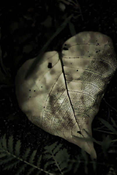 Earthtones Photograph - Alive by Bonnie Bruno