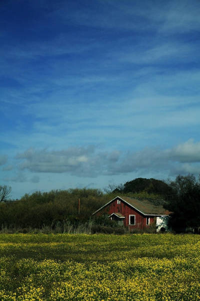 Mustard Photograph - All That Yellow by Laurie Search