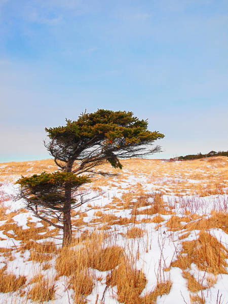Gros Morne Photograph - Alone Against The Wind by Stan Wojtaszek