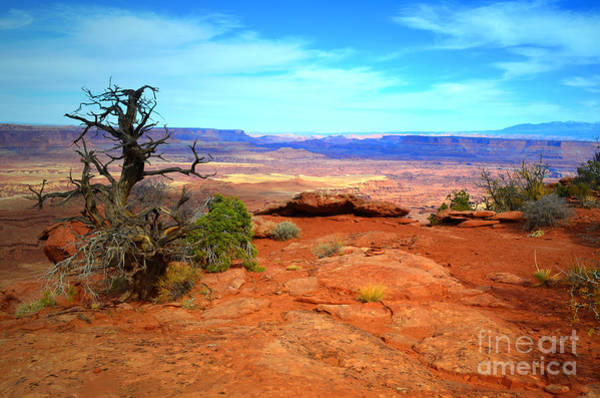 Photograph - Alone By The Canyon by Tara Turner