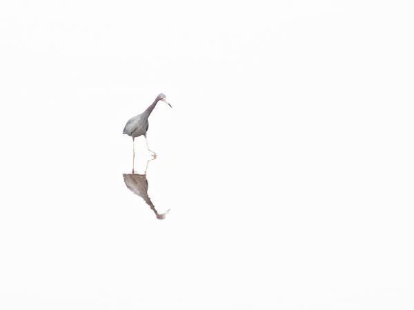 Photograph - Alone by Jim DeLillo