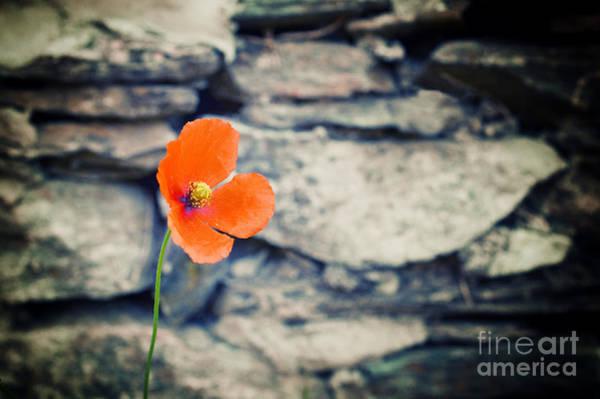 Photograph - Alone by Silvia Ganora