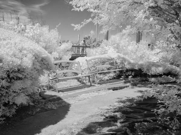 Photograph - Along The Boat Docks - Infrared by Bill Barber